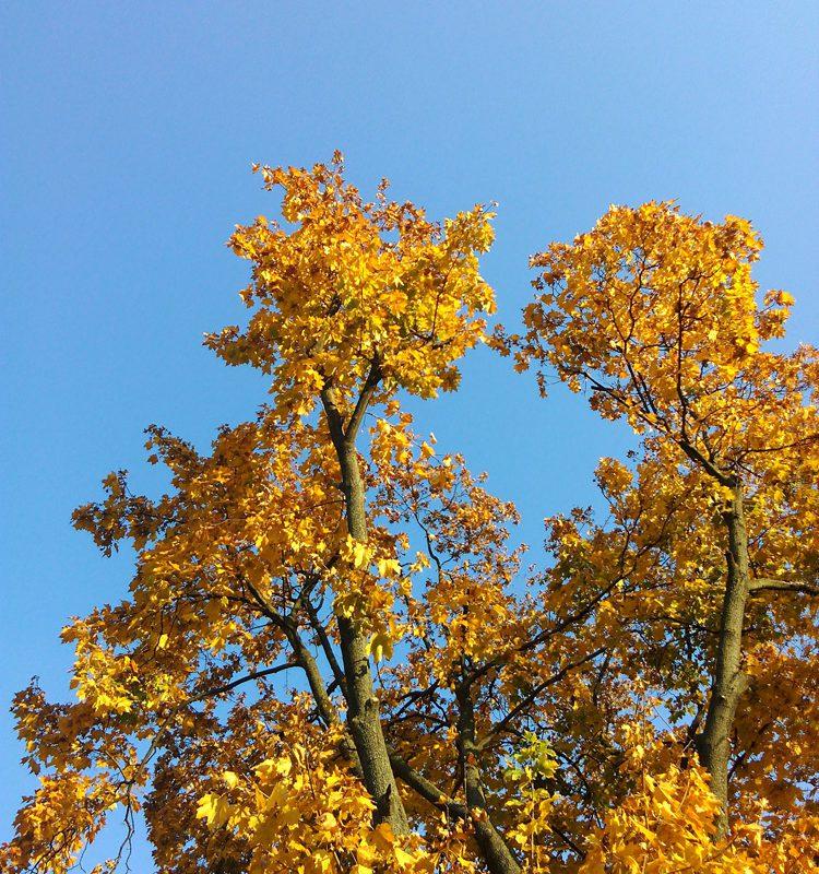 Золота осінь в Києві. Тренінгова компанія